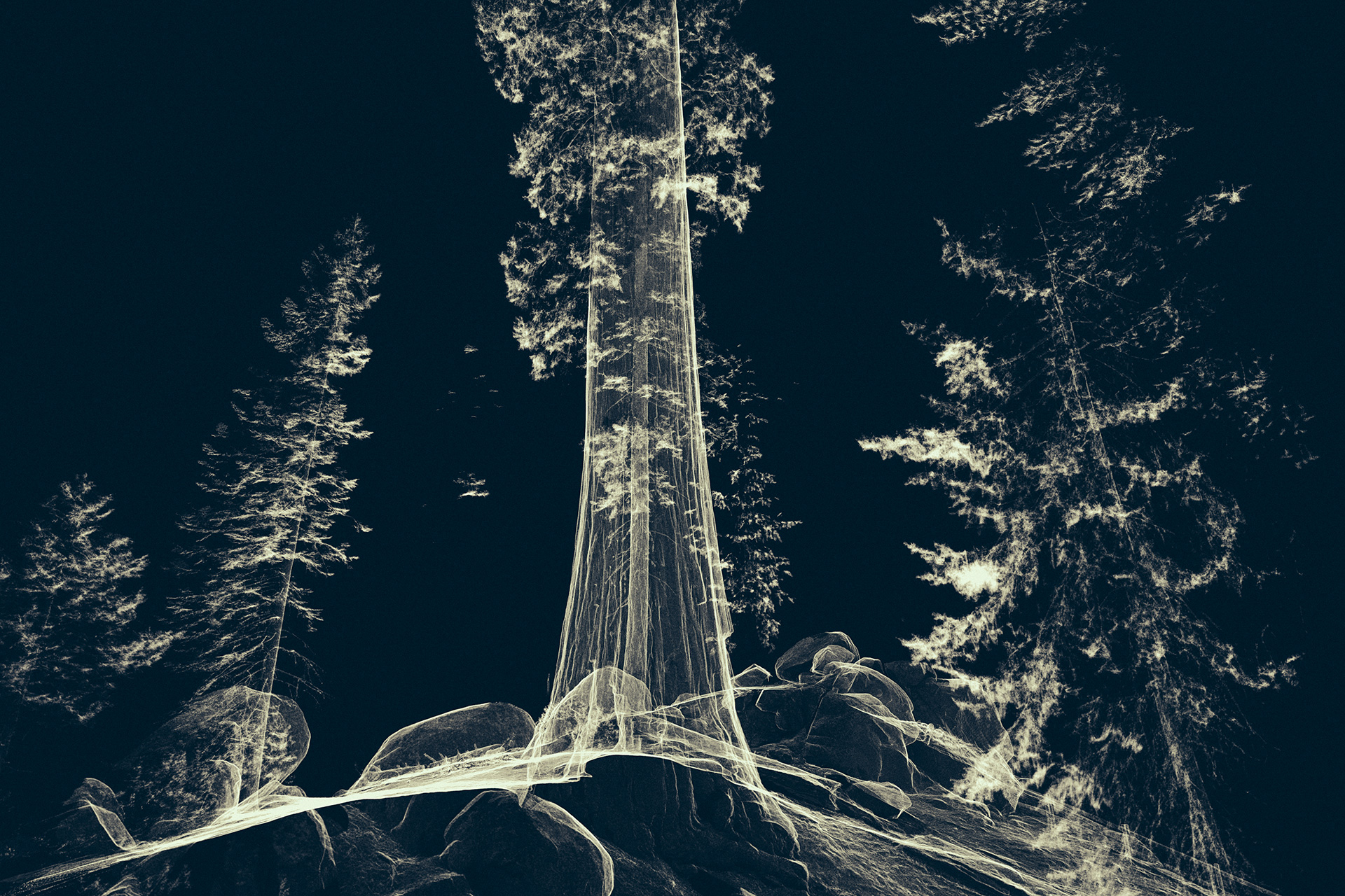 Treehugger: Wawona – an immersive digital art exhibited by Marshmallow Laser Feast at OMM | Odunpazari Modern Museum| Kengo Kuma and Associates | STIR