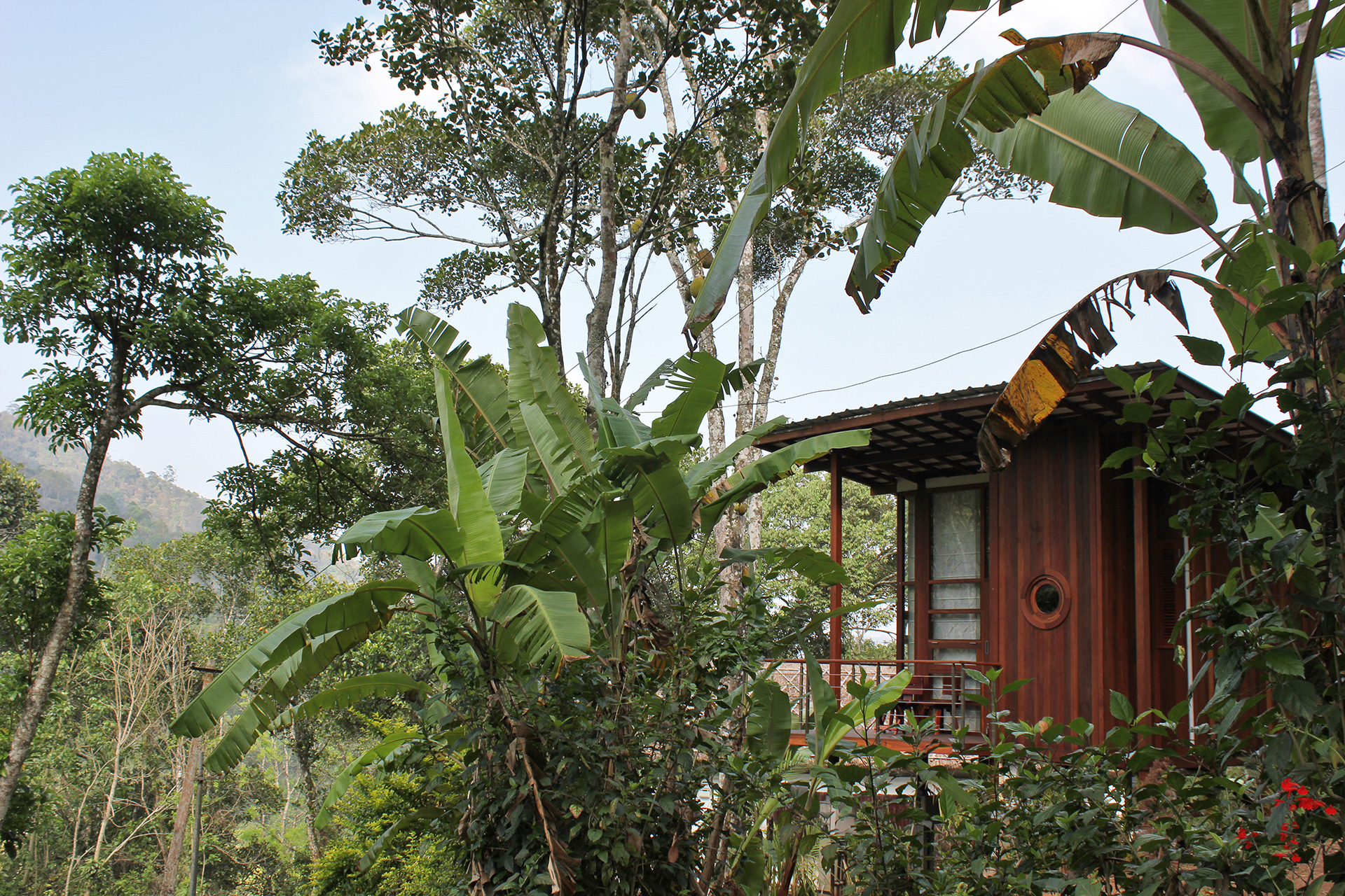 The cabins surrounded by trees and cardamom plantations | Cardomom Club| Kumar La Noce | Kerala | India | STIRworld