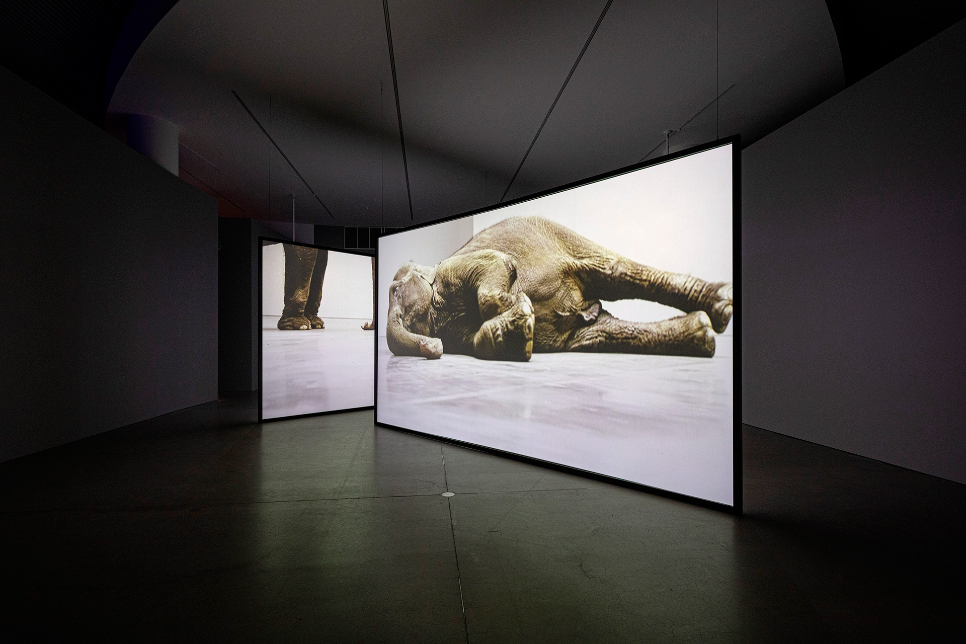 Douglas Gordon, Play Dead; real time, 2003, 3 channel video installation, installation view 3, blood, sweat, tears, DOX Centre for Contemporary Art, 2009 © Studio lost but found / VG Bild-Kunst, Bonn, 2019, Photo Studio lost but found / Frederik Pedersen; Courtesy Studio lost but found, Berlin | In My Shadow| Douglas Gordon | STIRworld