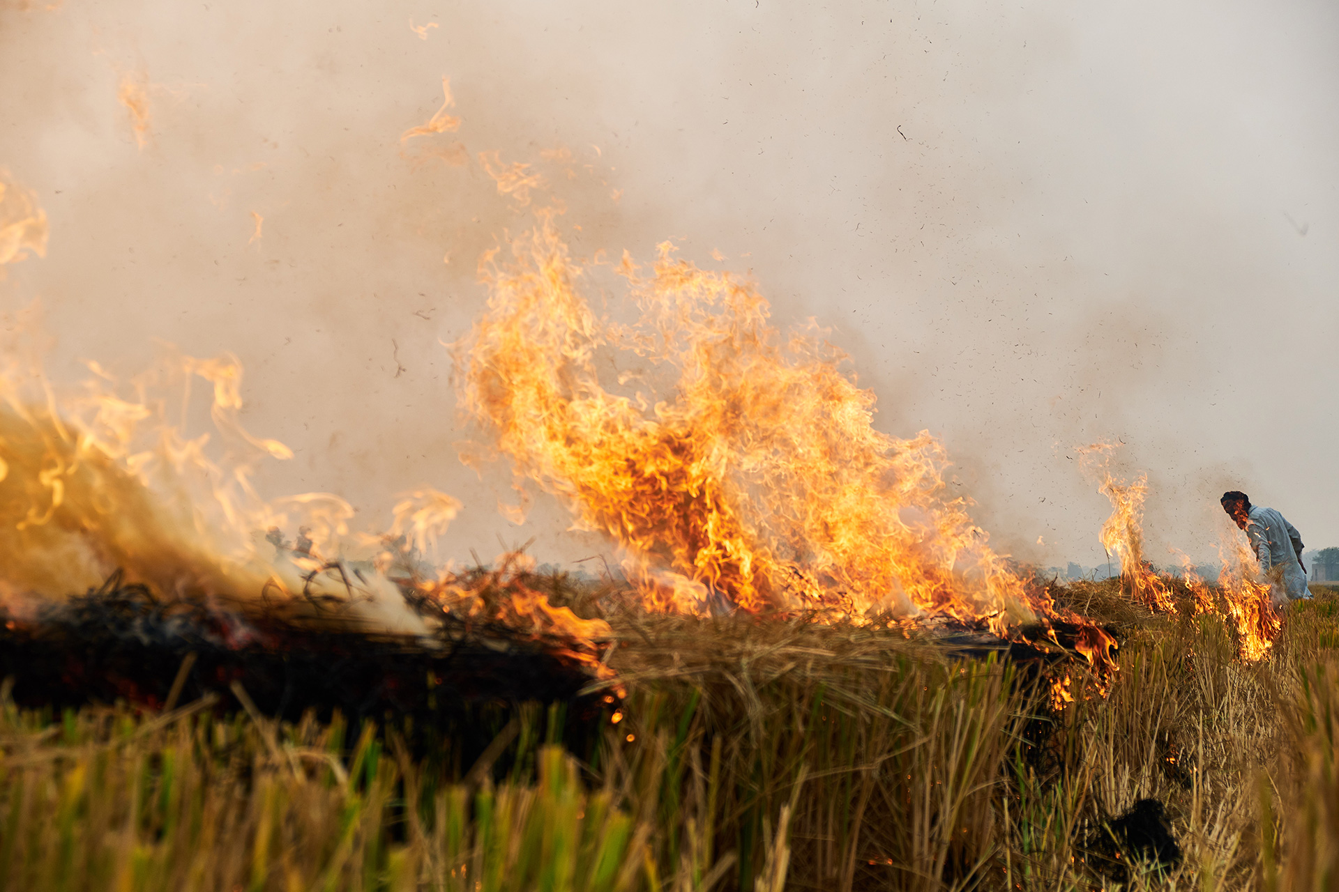 Burning of crop residue is one of the major causes of air pollution in cities of Northern India |  Better Air Now | IKEA | STIRworld