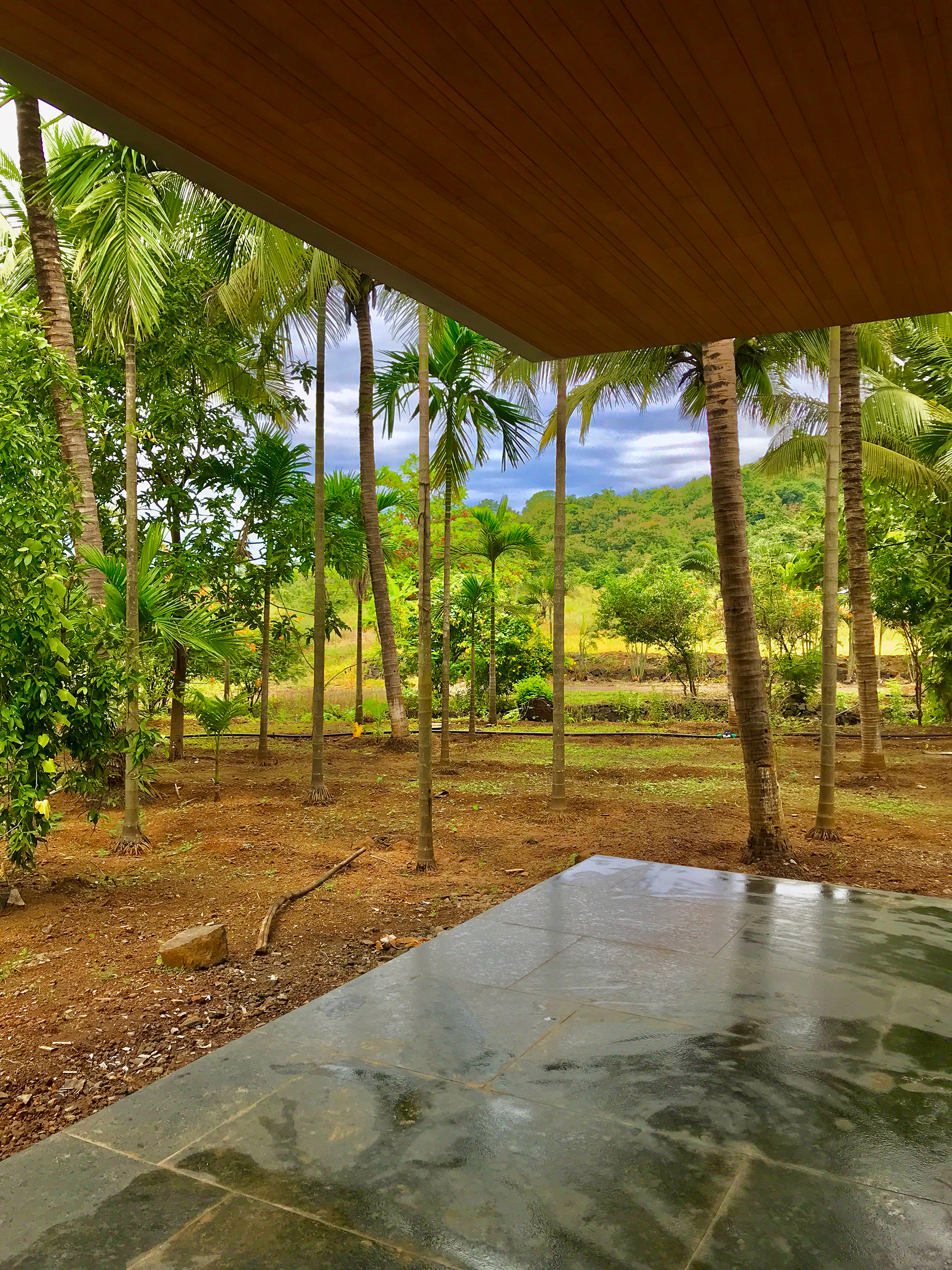 The site in Murud surrounded by coconut groves | Parikrama House | SPASM Design Architects | STIRworld