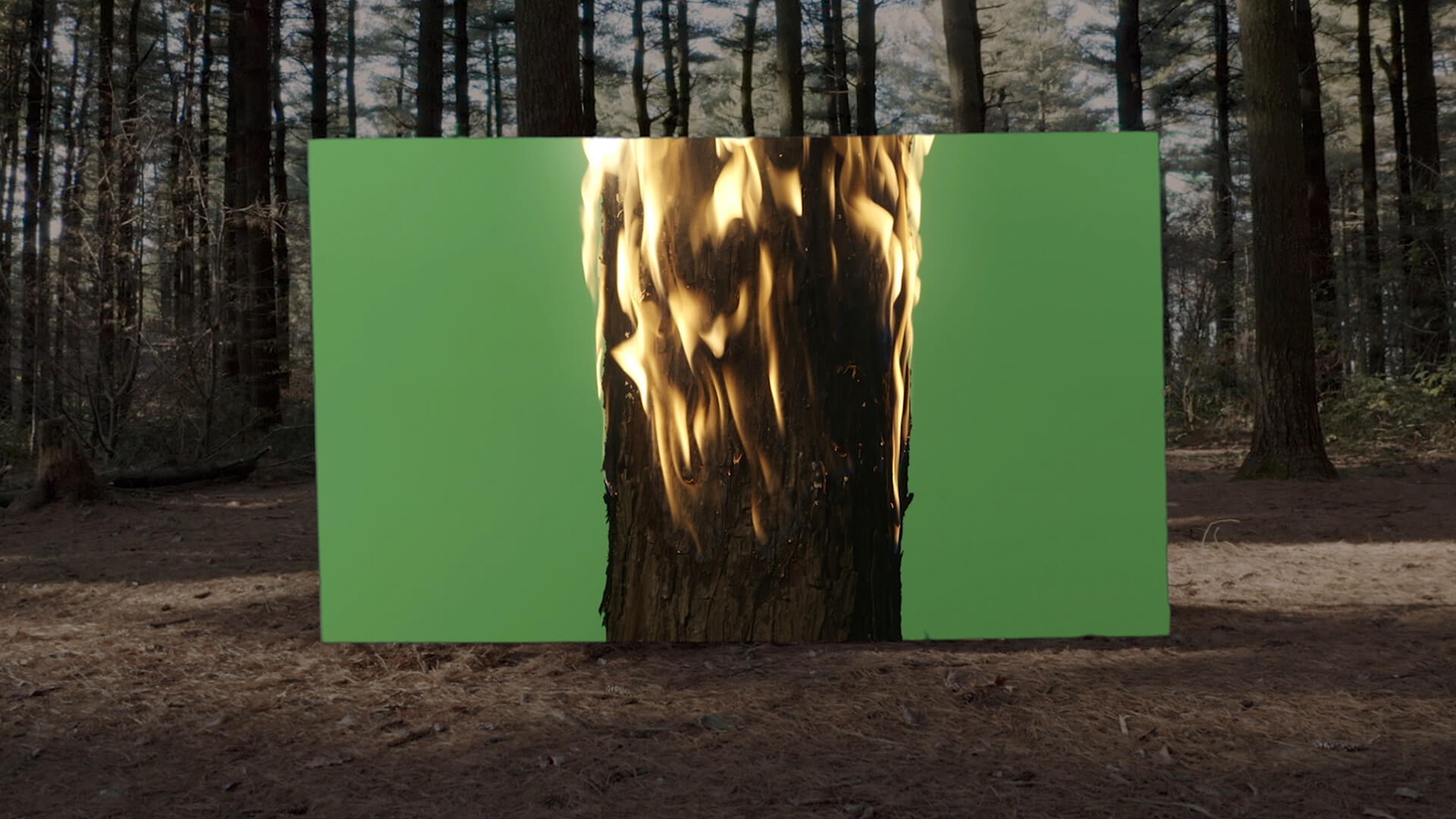 Formafantasma, stills from Cambio: Visual Essay, 2020. Green screen in Bosco del Chignolo, Montemerlo, Italy | Cambio by Formafantasma at the Serpentine Gallery | STIRworld