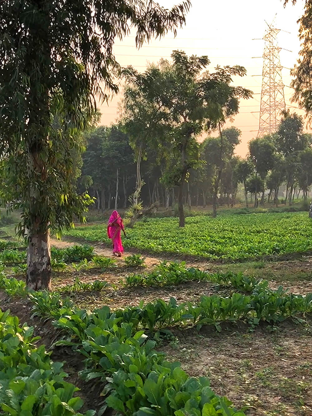 The farms currently co-exist with biodiversity parks and forests with farmers weaving their paths as they traverse the floodplains | Who does the land belong to? The land in the heart of Delhi | STIRworld