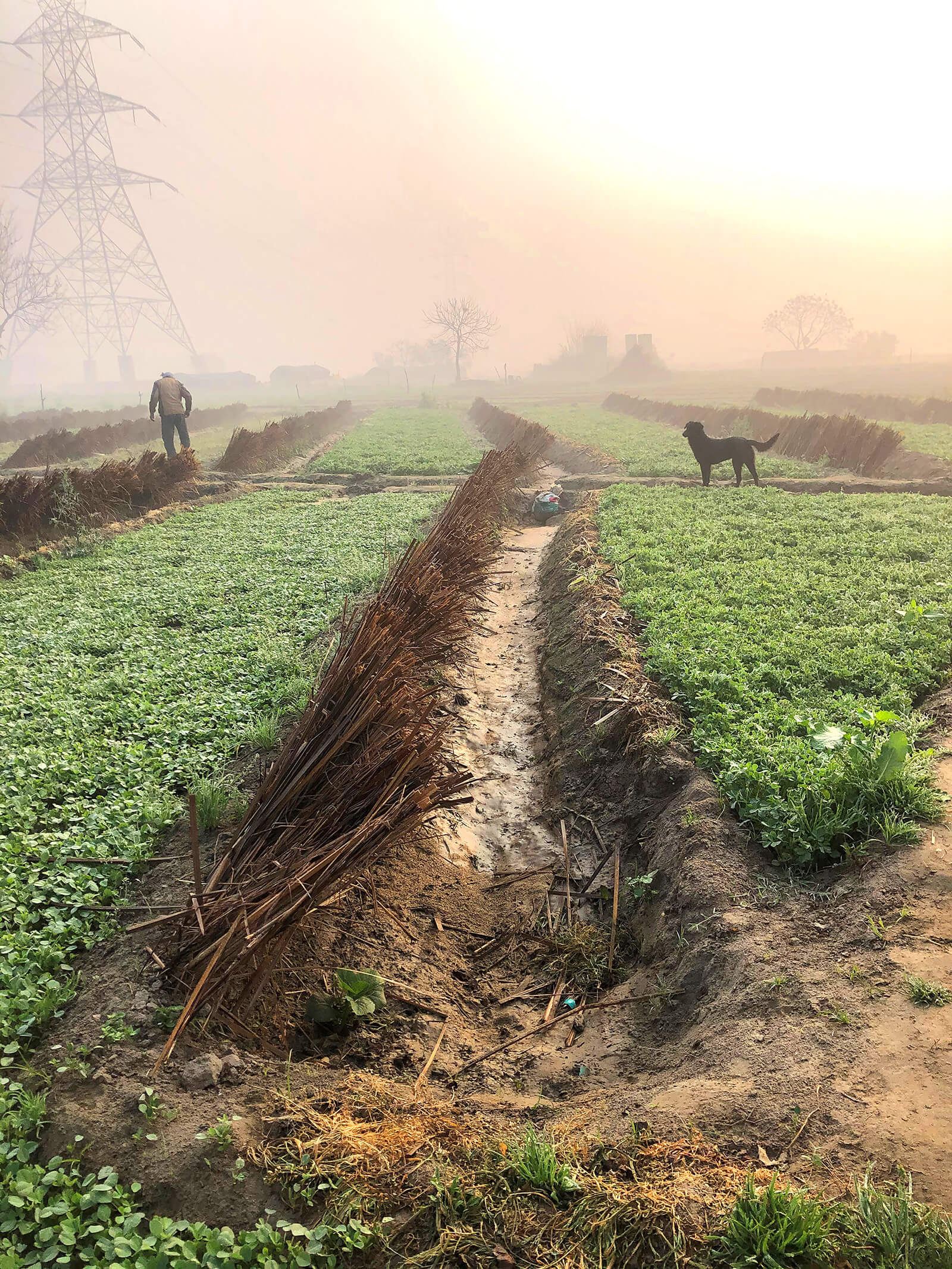 Since the water from River Yamuna is unfit for human use, the farmers have been innovatively using groundwater and traditional dew catchers for irrigating fields | Who does the land belong to? The land in the heart of Delhi | STIRworld