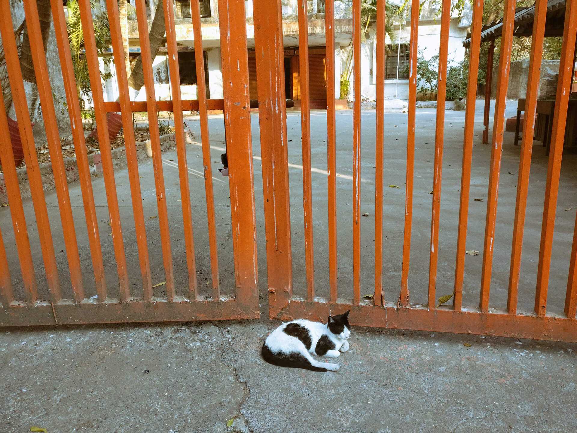 A cat rests at the gate in Mumbai. The guard (not seen in the picture) rests at the end of the gate | Gated communities are destroying public life of Indian cities | STIRworld