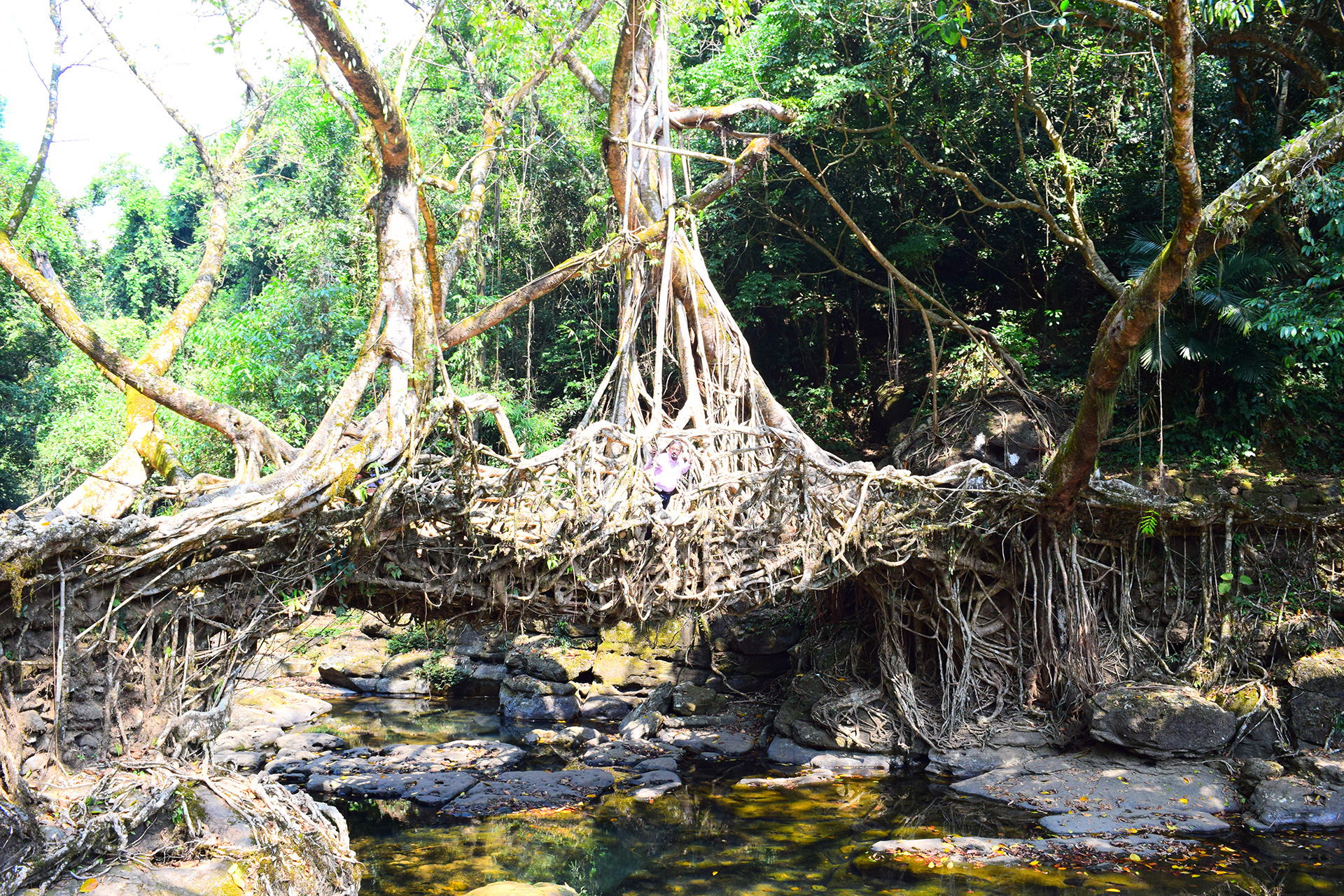 Living roots bridge in North East India | Shirish Beri | STIR